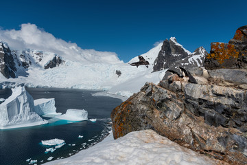 Penguins in antarctic mountains