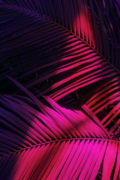 Photo of palm leaves in neon lighting