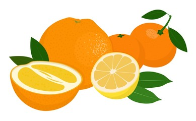 Mandarines, tangerine, clementine, orange, lemon with leaves isolated on white background. Citrus fruit. Vector Illustration