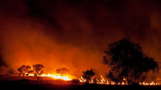 bushfire in grassland with trees in australia