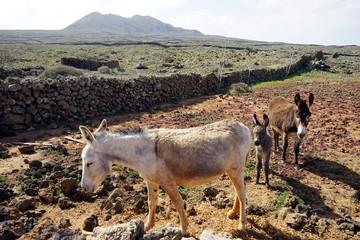 Donkeys on the land