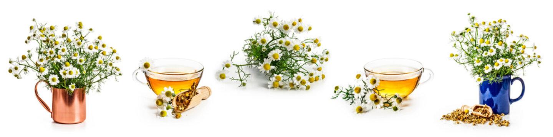 Chamomile flowers and tea