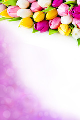 Bouquet of tulips against white background