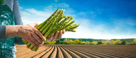 Bundle of green asparagus in hands of farmer
