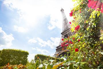 Eifel tower through red roses Paris, France