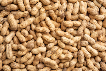 Peanuts harvested in Chiba, Japan