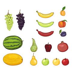 Vector Set of Cartoon Fruits. Grapes, Melon, Watermelon, Pear, Apple, Banana, Apricot, Peach, Plum, Pomegranate.