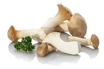 Kräuterseitlinge Seitlinge Pilze Nahaufnahme weiß isoliert