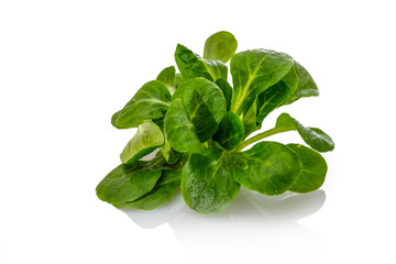 Feldsalat Ackersalat Blattsalat grün weiß isoliert