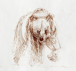 quick sketch of bear on white paper.