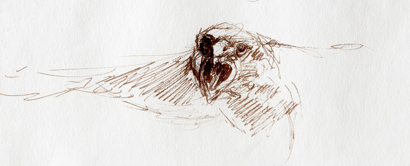 sketch of an eagle head on a paper.