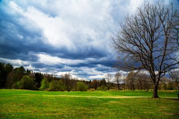 Spring landscape. panorama