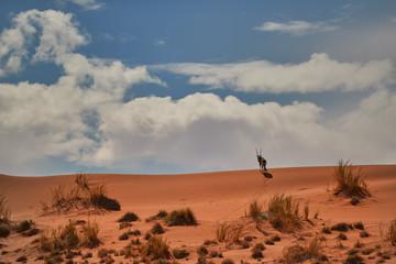 Picturesque Namib desert landscape, view on Gemsbok, Oryx gazella on the ridge of huge red dune against blue sky. Typical desert environment,  Namib Naukluft National Park, Namibia.