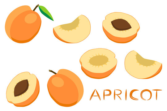 Illustration on theme big set different types round apricot