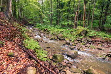 river in the forest. trees, rocks and fallen foliage on the riverbank. freshness of beautiful nature scenery. beautiful background. summer overcast day.