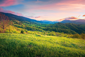mountainous springtime countryside at sunset. wonderful landscape with grassy meadow and forested hills. sky with red clouds