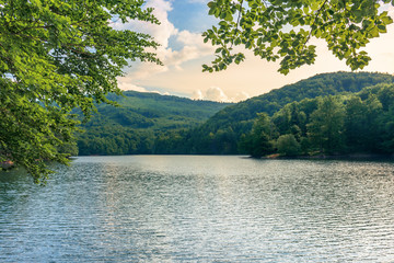lake among the beech forest in summer. beautiful nature scenery in the evening