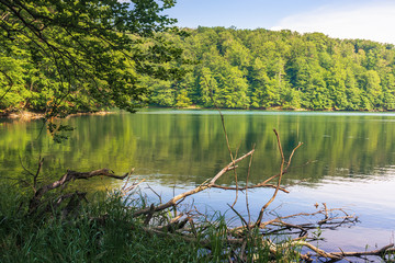 summer in slovakian vihorlat region. beautiful scenery among the primeval beech forest. fallen dry trunks and branches among the grass on the shore of the lake Morske Oko