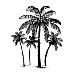 Vector Hand drawn sketch of palm logo illustration on white background