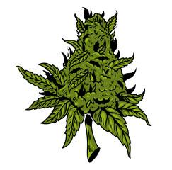 cannabis drawing design