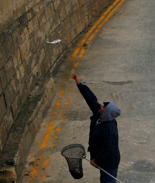 A man tosses a fish to a colleague while catching fish which escaped from an offshore fish farm as gale force winds and rough seas lash the Maltese islands, in St Paul's Bay
