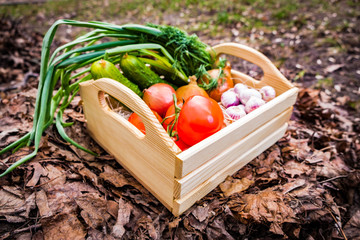 Vegetables cucumbers tomatoes onion garlic in a box