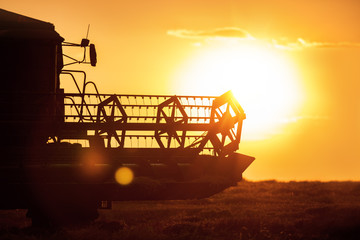 Wall Mural - Combine harvester machine working in a wheat field at sunset.