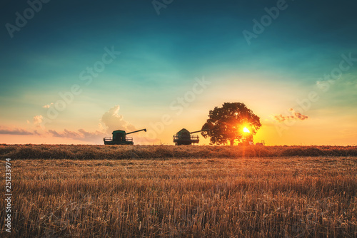 Wall mural Combine harvester machine working in a wheat field at sunset. Lonely tree