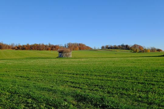 Kleine Scheune in grünem Feld mit Wald, Herbst, Andechs, Bayern