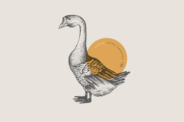 Retro engraving goose. Hand-drawn picture with a poultry. Can be used for menu restaurants, for packaging in markets and shops. Vector vintage illustrations.