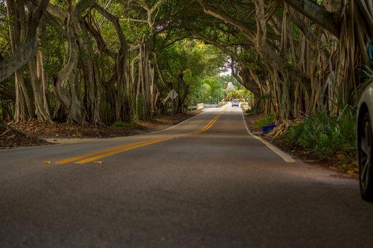 Banyan Tree Road Stuart Florida Martin County