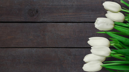 Dark brown background with white tulip flowers