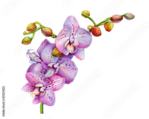 0d122bbcad0d7 Blooming branch of tropical pink orchid flower (aka moth orchids ...