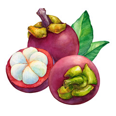 Tropical fruit - fresh purple mangosteen (Garcinia mangostana, monkey fruit, Queen of fruits). Whole and half. Hand drawn watercolor painting illustration isolated on white background.