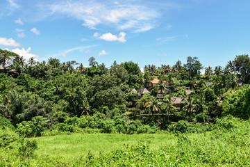 Campuhan Ridge Walk just outside of Ubud, Bali, Indonesia.