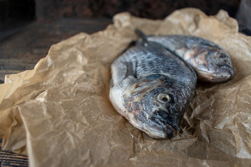 Two whole Tilapia uncooked on wax paper and dark wood background