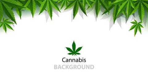 Marijuana plant and cannabis on white backgrounds.