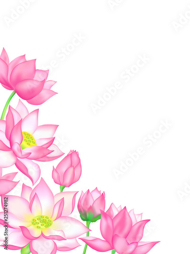 Pink Lotus Flower Bouquets With Buds Illustration Stock Image And
