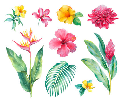 Watercolor tropical flowers. Hand painted illustrations isolated on white background