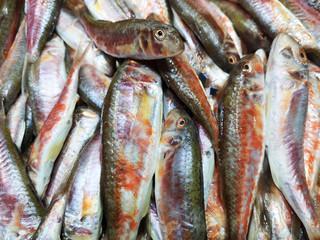 Fresh fish and fish market