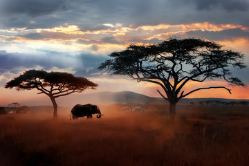 Wild African elephant in the savannah. Serengeti National Park. Wildlife of Tanzania. African landscape. Wall mural