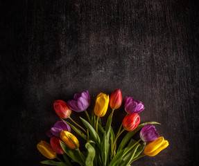 Vibrant colorful tulips