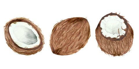 Hand painted watercolor coconut, ripe sliced half, food art isolated on white background.