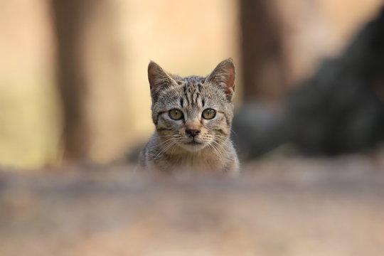 仔猫(野良猫) Kitten (Stray cat)