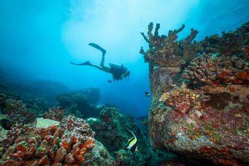Young woman scuba diver exploring coral reef. Wall mural