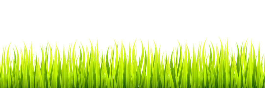 Seamless spring grass lines for edging, footer and decorations. Springtime sprouts grows in a daylight.