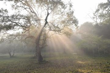 Periyar National Park, Kerala, India