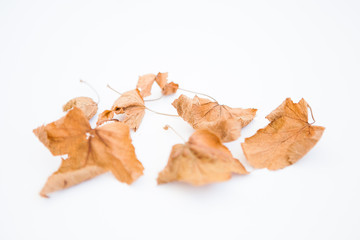 Dried yellow leaves