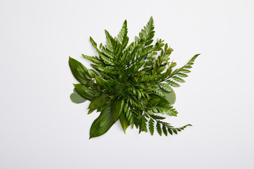 composition of fresh green fern leaves isolated on grey background