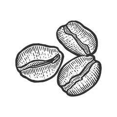 Coffee beans roasted sketch engraving vector illustration. Scratch board style imitation. Black and white hand drawn image.